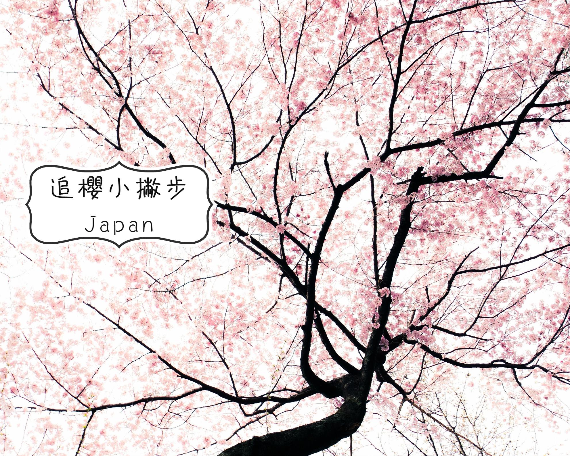 sakura-kyoto-23cover